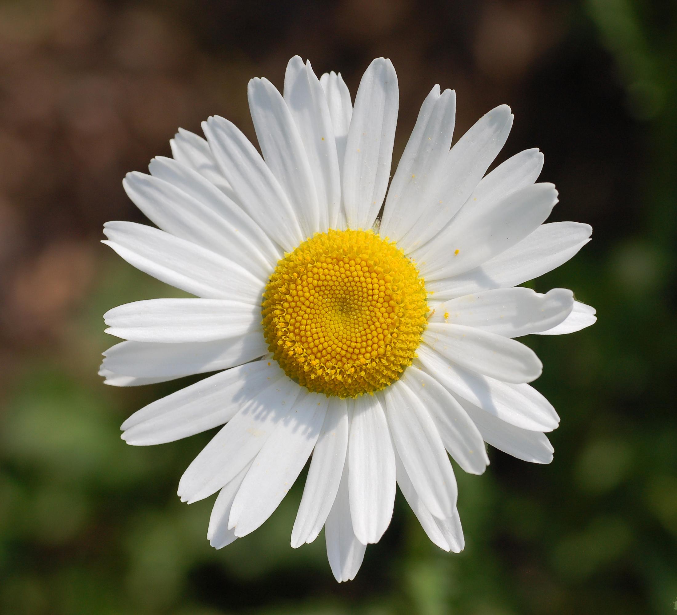 1 flower svg download 1 flower - ClipartFest svg download