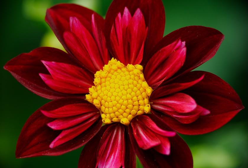 1 flower clip art transparent download Folios - Tony Sweet Photography clip art transparent download