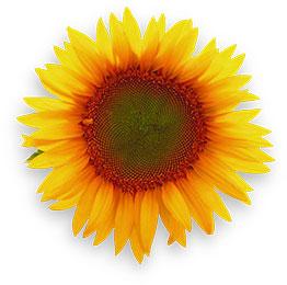 1 flower banner library stock Free Flower Animations - Animated Flowers - Plants - Trees banner library stock