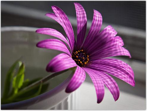 1 flower vector stock Download Flower Wallpapers | Wallpapers | RizwanAshraf.com vector stock