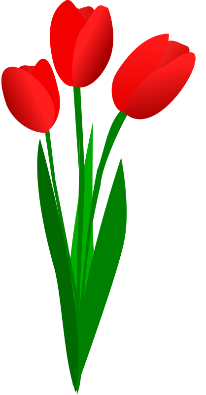 Tulips free clipart jpg freeuse stock Tulip Flower Banner Transparent Stock RR Collections Petite Tulips ... jpg freeuse stock