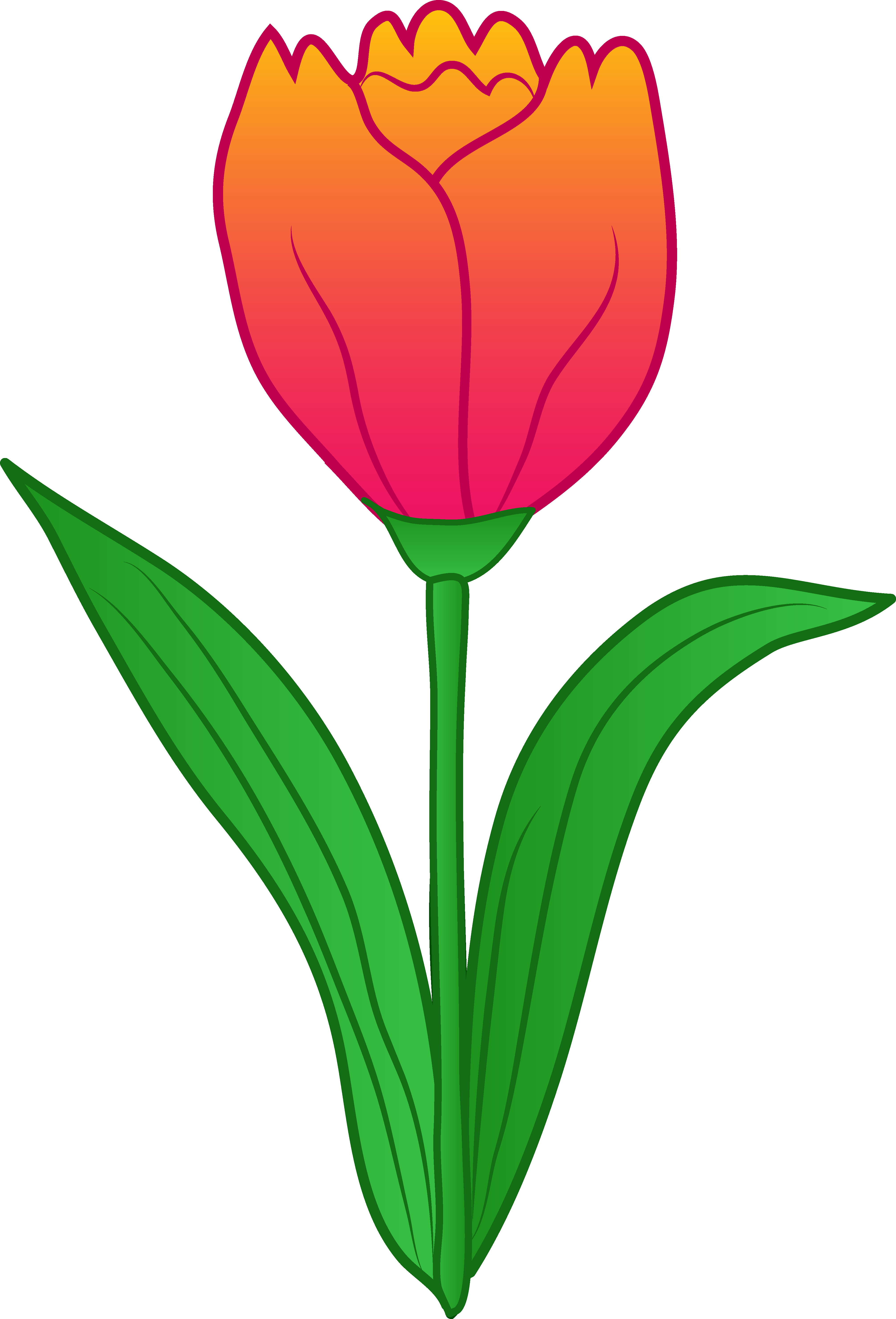 Tulip clipart birds eye view svg transparent library Tulip-flower-free-PNG-transparent-images-free-download-clipart-pics ... svg transparent library