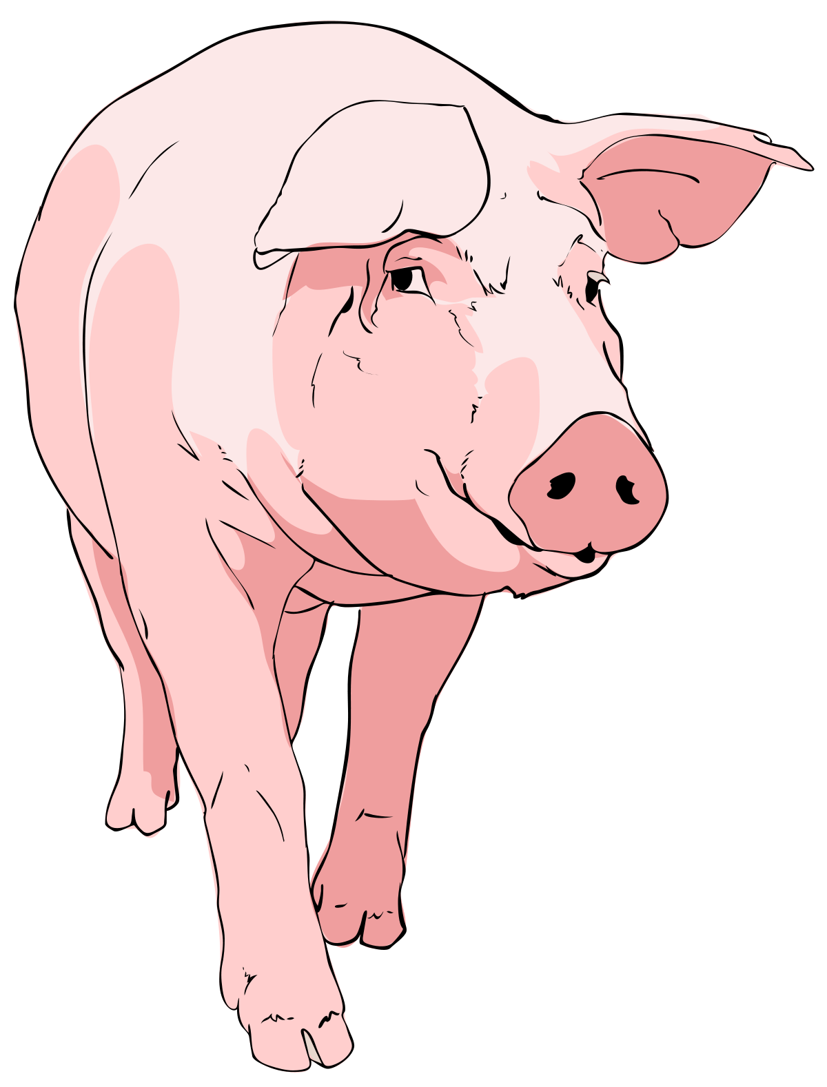 11 pigs clipart svg library library File:Pig clipart 01.svg - Wikimedia Commons svg library library