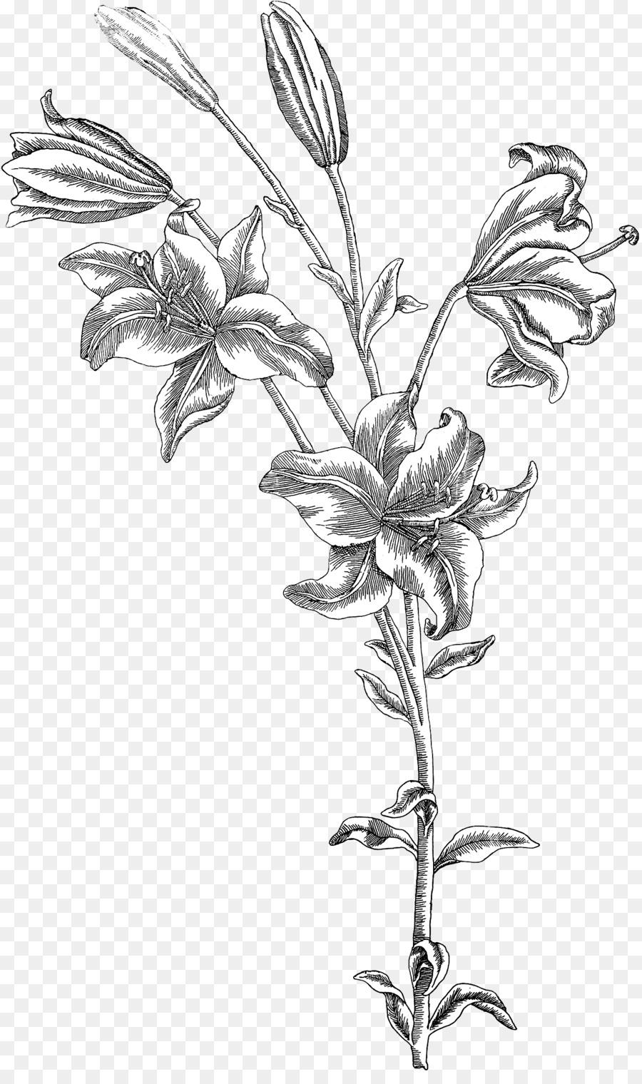 12 leaf flower clipart black and white free Black And White Flower clipart - Leaf, Botany, Drawing, transparent ... free