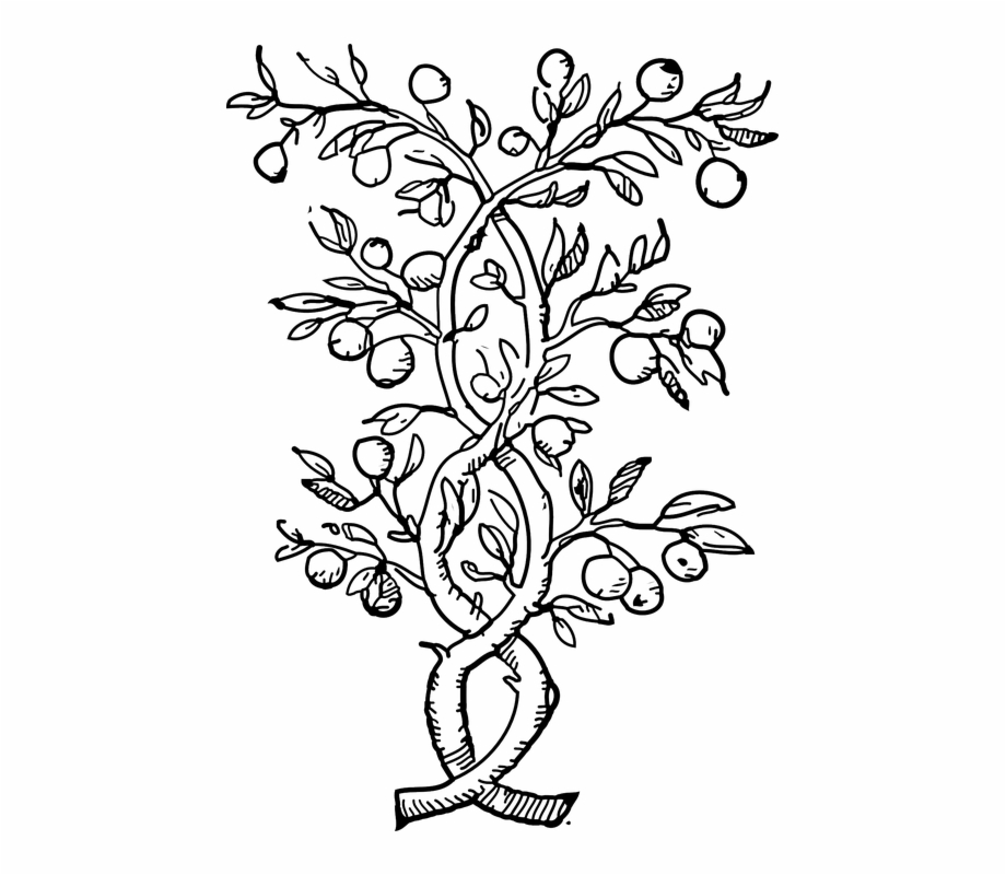 12 leaf flower clipart black and white clip art library download Plants Climbers Vines Black And White Leaves Stems - Fruit Tree ... clip art library download