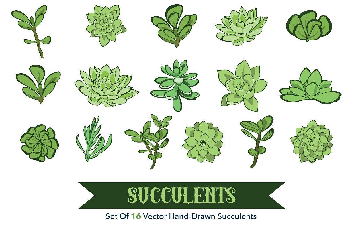 16 objects clipart graphic free library 16 Succulets Hand Drawn Clipart graphic free library