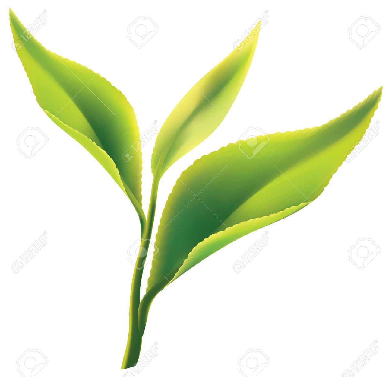 Tea leaves clipart