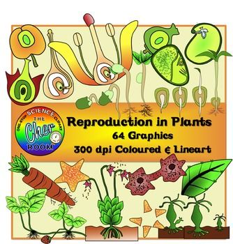 2 3 plant clipart svg freeuse stock Reproduction in Plants Clipart | TpT Science Lessons | Vegetative ... svg freeuse stock