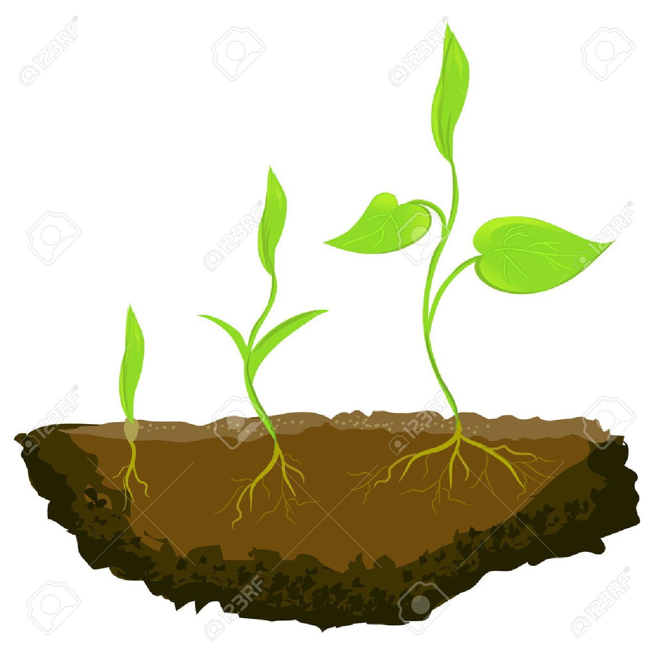 Plant grow clipart picture transparent stock Growing Plant Clipart | Free download best Growing Plant Clipart on ... picture transparent stock