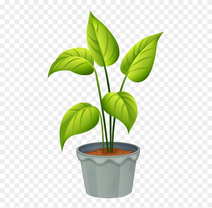 2 3 plantsplant clipart graphic black and white stock Green Home Plant - Flowering Plants And Non Flowering Plants Clipart ... graphic black and white stock