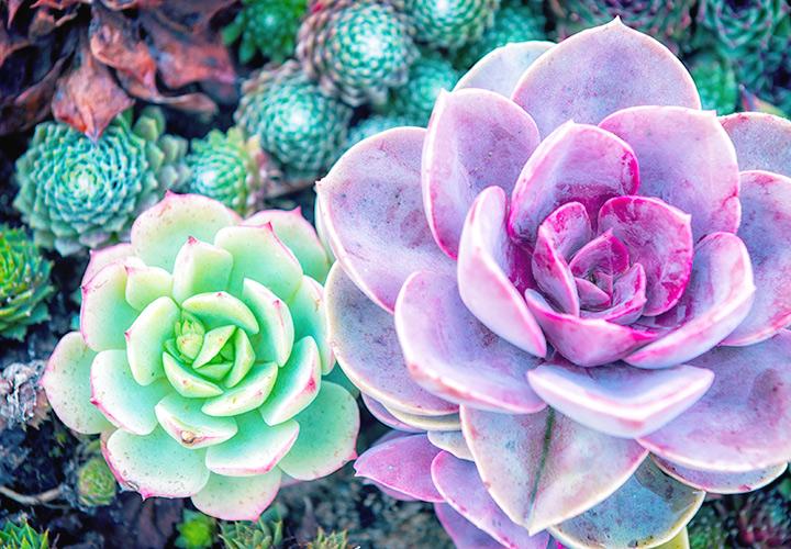 2 3 plantsplant clipart clip 127 Stunning Desert Plants - FTD.com clip