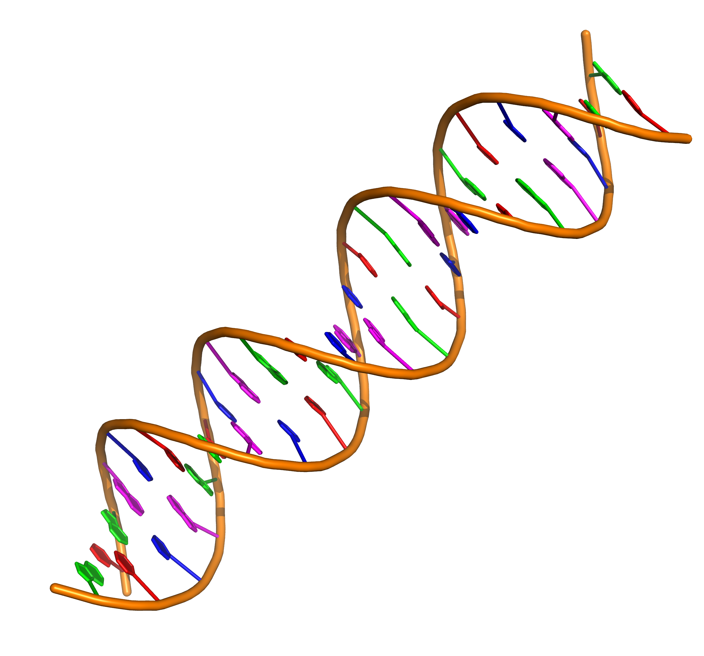 2 dna strands clipart svg black and white stock Nucleic acid double helix - Wikipedia svg black and white stock