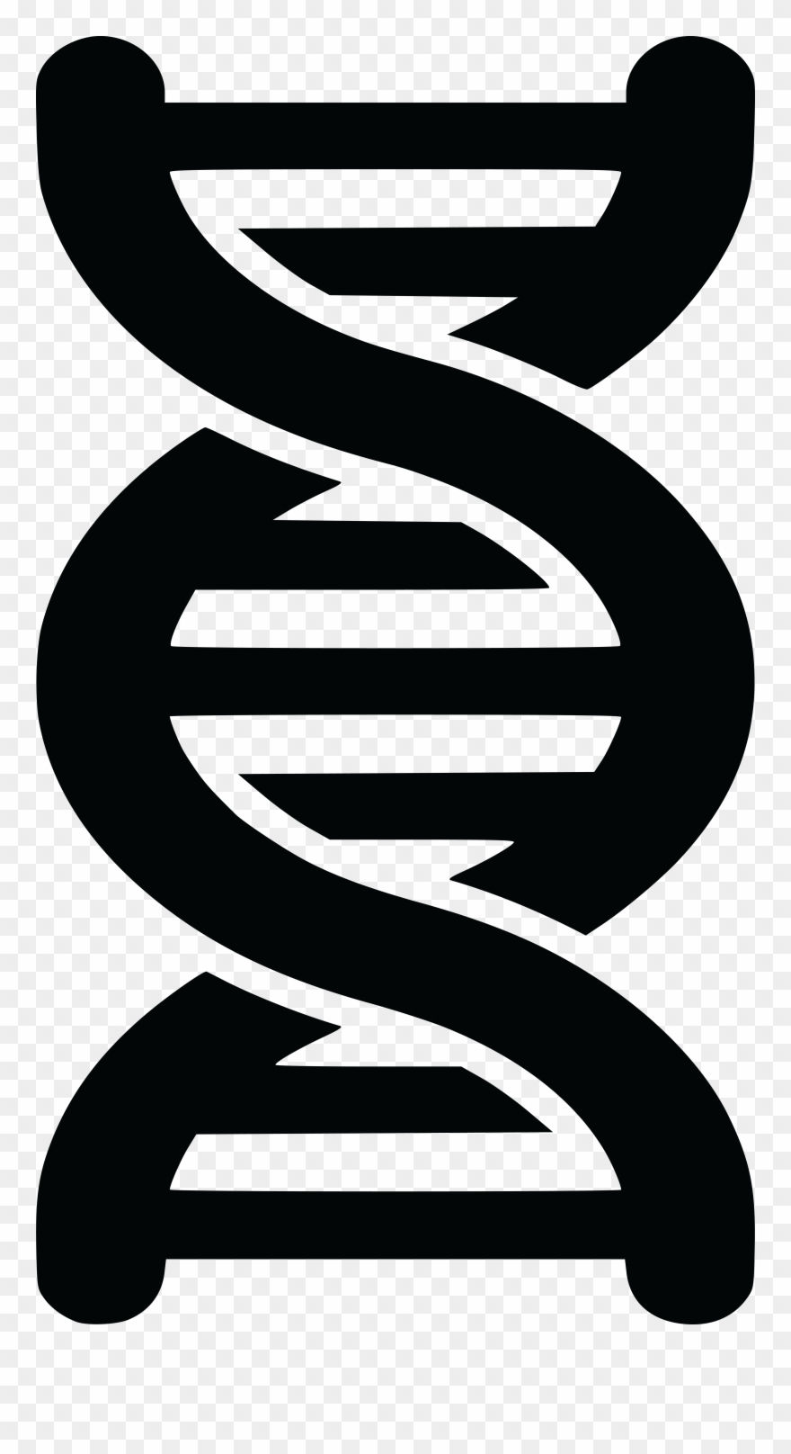 2 dna strands clipart picture transparent download Free Clipart Of A Black And White Dna Strand Double - Double Helix ... picture transparent download