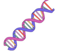 2 dna strands clipart graphic transparent library Dna Clipart   Free download best Dna Clipart on ClipArtMag.com graphic transparent library