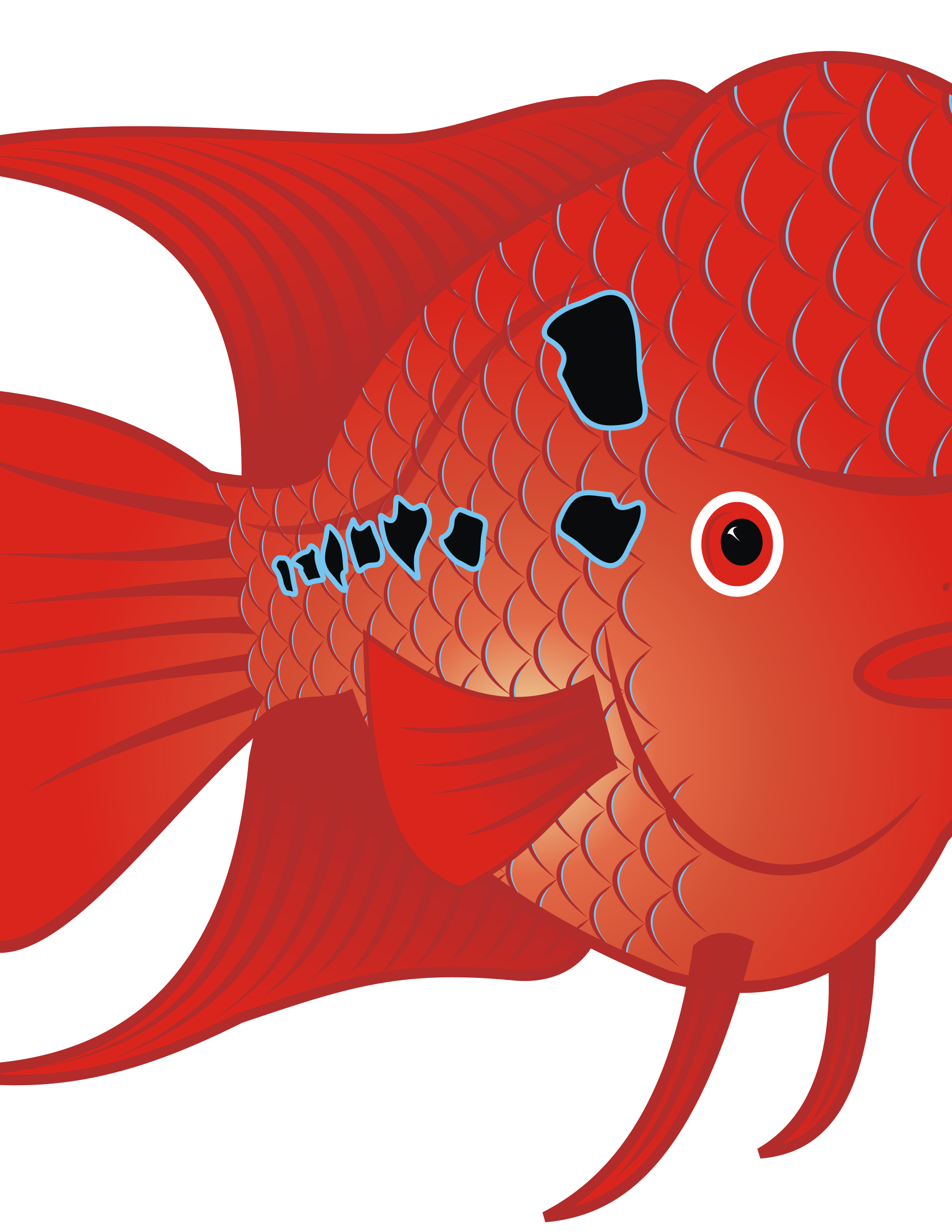 2 fish clipart stock Clipart - Flowerhorn Fish 2 stock