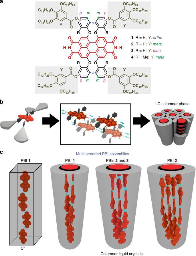 2 groups agree clipart jpg royalty free Self-assembly of multi-stranded perylene dye J-aggregates in ... jpg royalty free