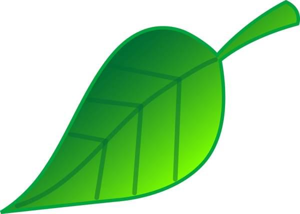 Large leaf clipart