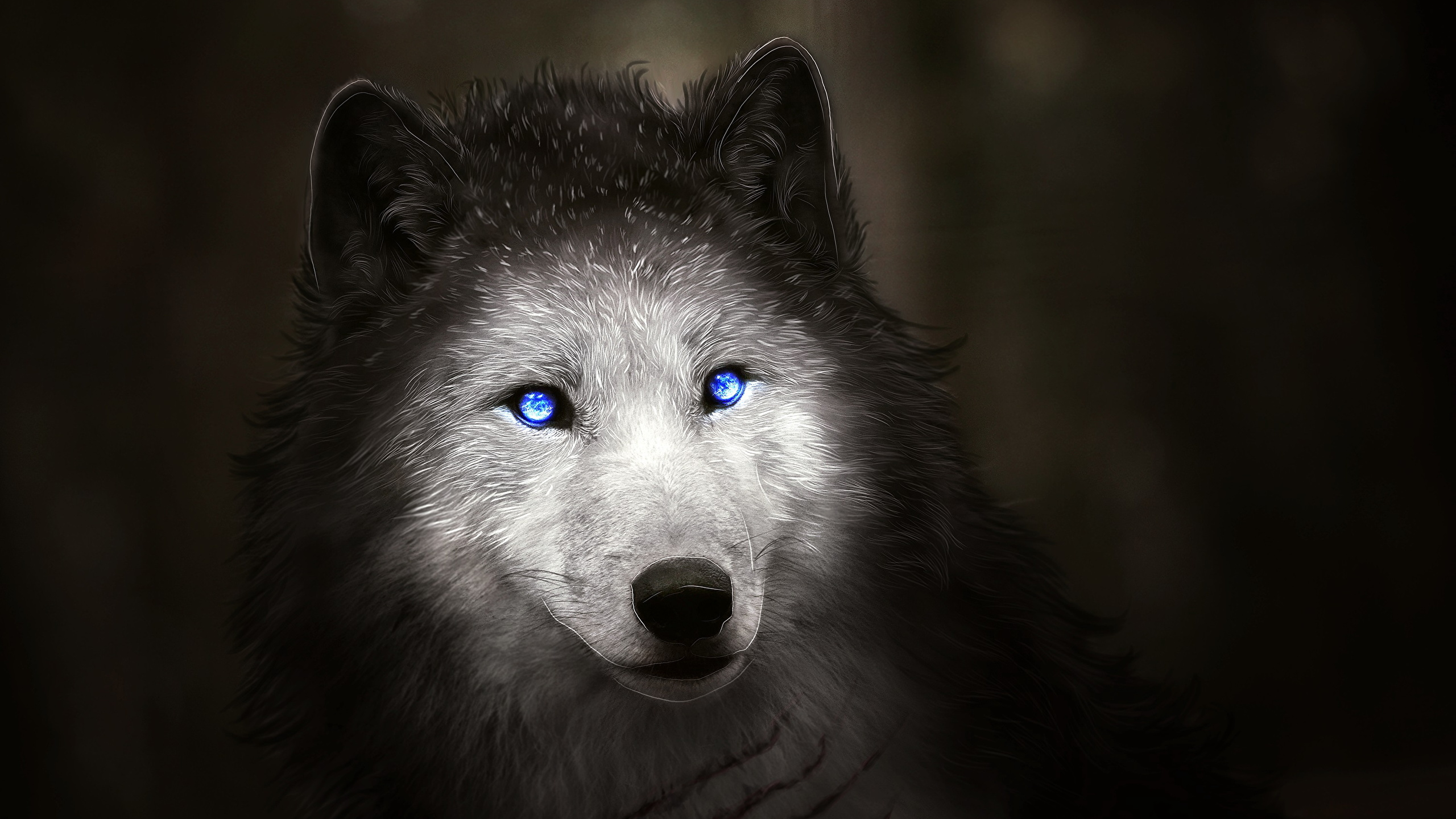 2560x1440 wolf clipart picture library wolf hd wallpaper picture library