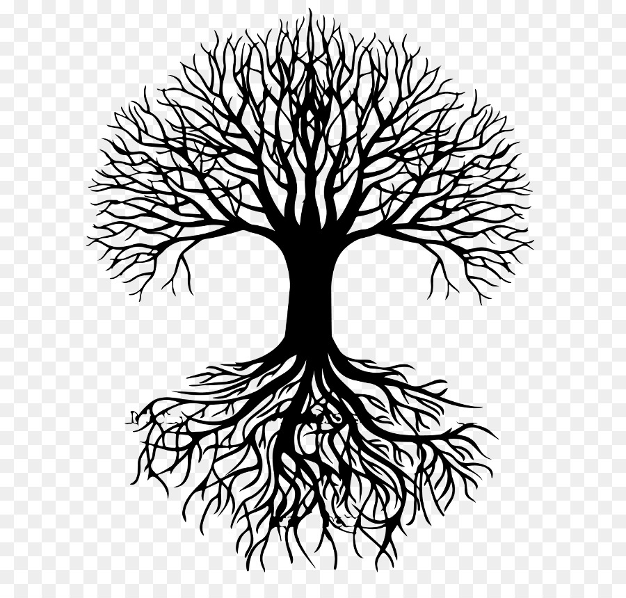 3 trees connected by roots clipart image United States Root Tree Clip art - root png download - 8000*4500 ... image
