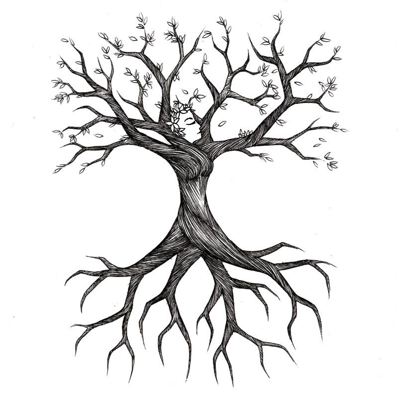 Uprooted tree clipart svg transparent Tree Roots Sketch | Treesa\'s Tree | Decor for my salon | Roots ... svg transparent