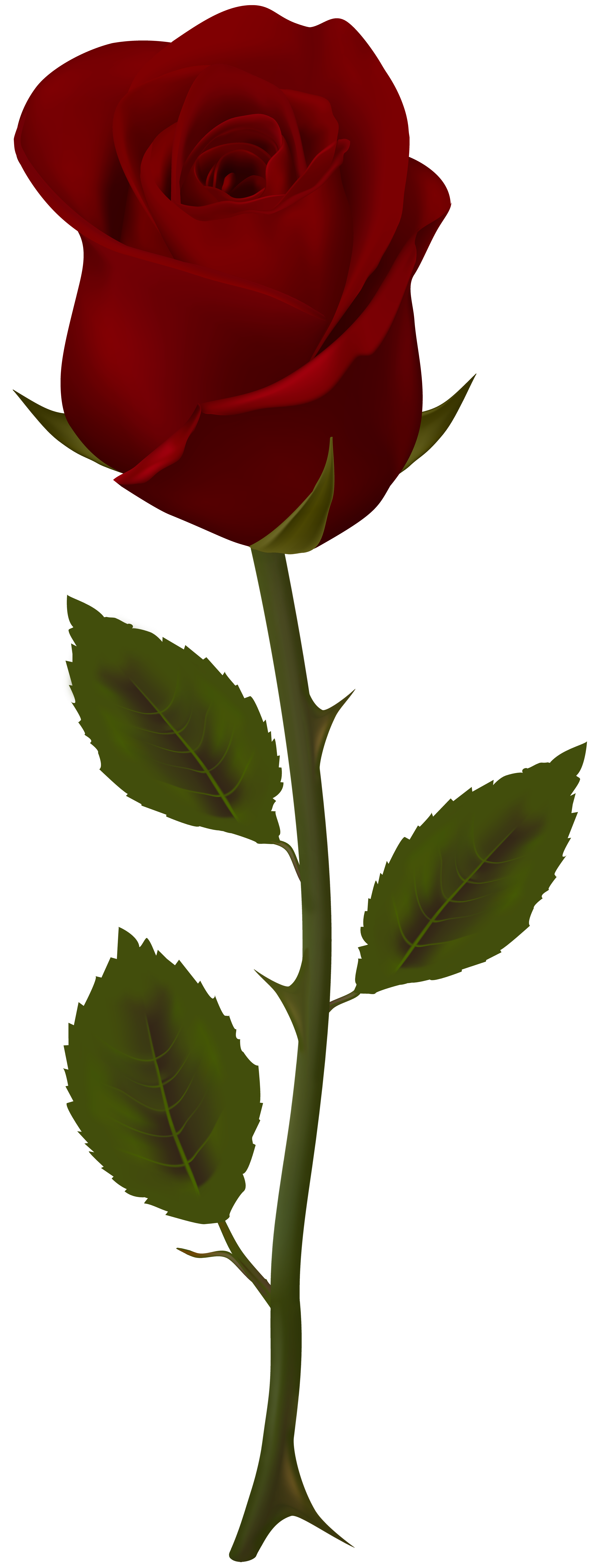 Clipart flower stems vector free library Dark Red Rose Transparent PNG Clip Art | Gallery Yopriceville ... vector free library