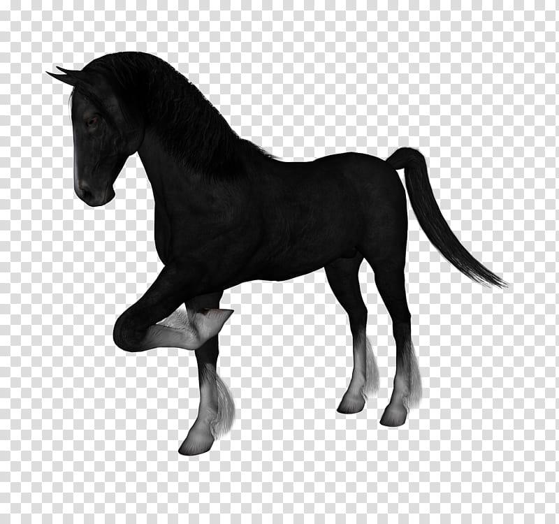 3d horse clipart clip D Horses , black horse transparent background PNG clipart | HiClipart clip