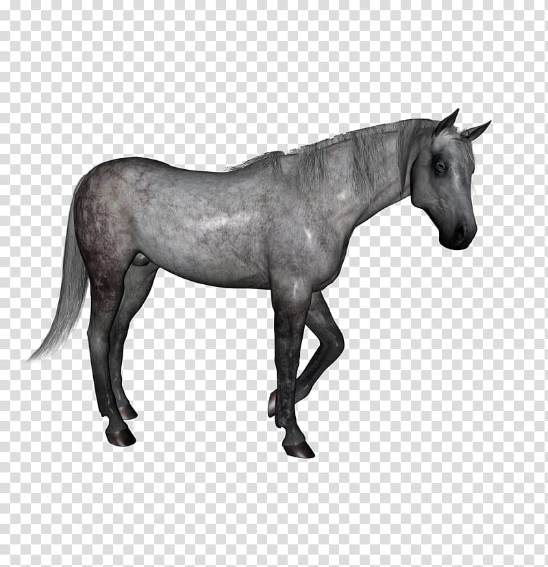 D Horses , gray horse transparent background PNG clipart | HiClipart svg library download