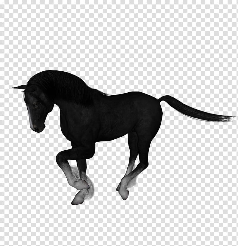 D Horses , black horse transparent background PNG clipart | HiClipart vector black and white library