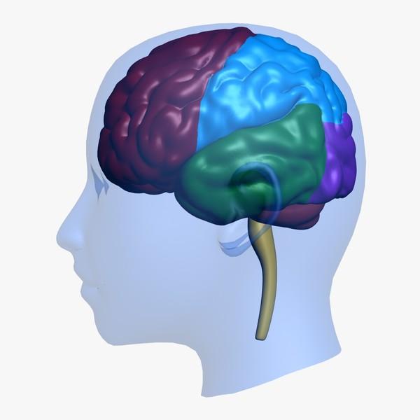 3d max clipart clipart transparent download brain head education 3d max - ClipArt Best - ClipArt Best clipart transparent download