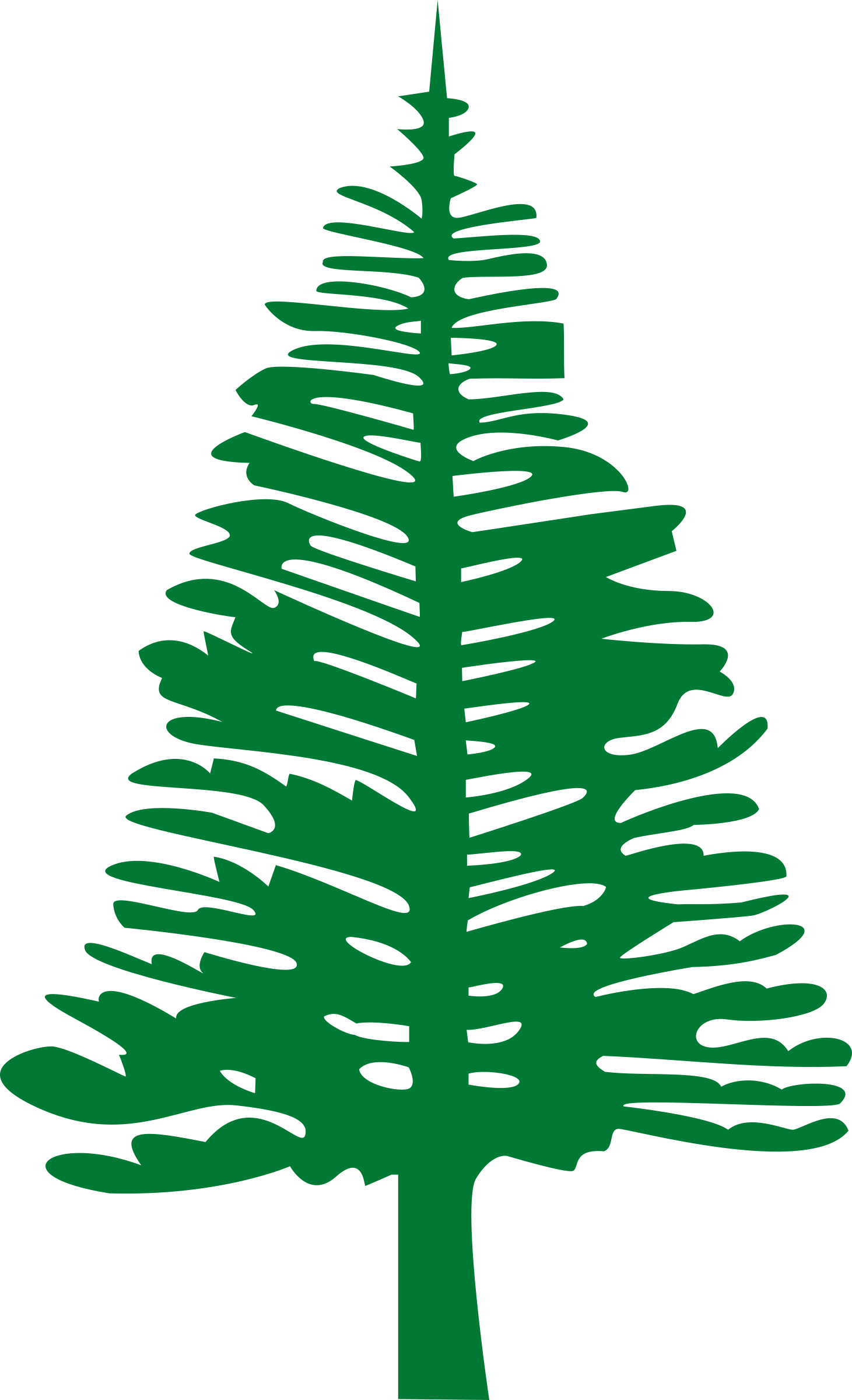 White pine tree clipart vector freeuse Clipart - Norfolk Island Pine vector freeuse