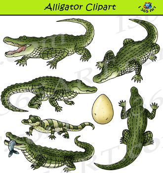 Mama and baby alligator clipart line drawing clip library download Alligator Clipart - Realistic clip library download