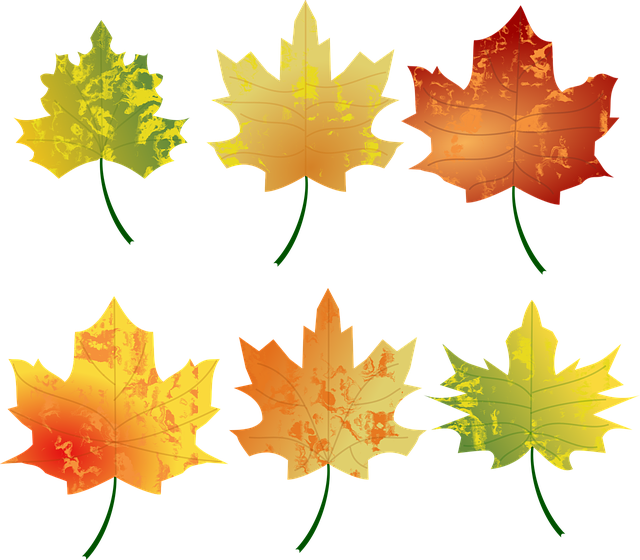 4 seasons tree clipart vector freeuse download Board - Seasons & Weather - CoughDrop vector freeuse download