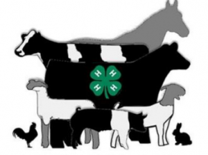 4-h animal clipart