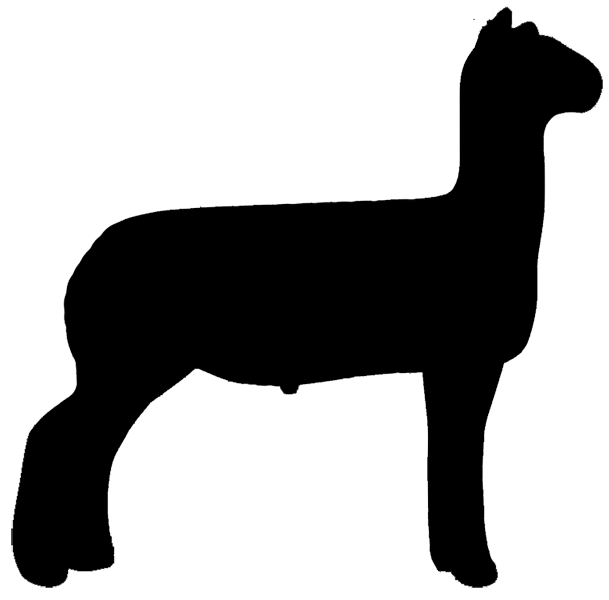 4h lamb clipart picture royalty free Free Show Lamb Clip Art Sheep Graphics Clublamb Images, Show Lamb ... picture royalty free