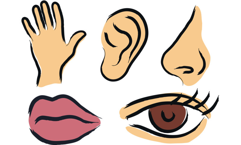 sense free download. Five senses clipart images