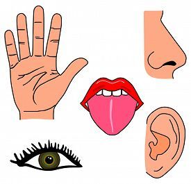 Image result for my. Five senses clipart images