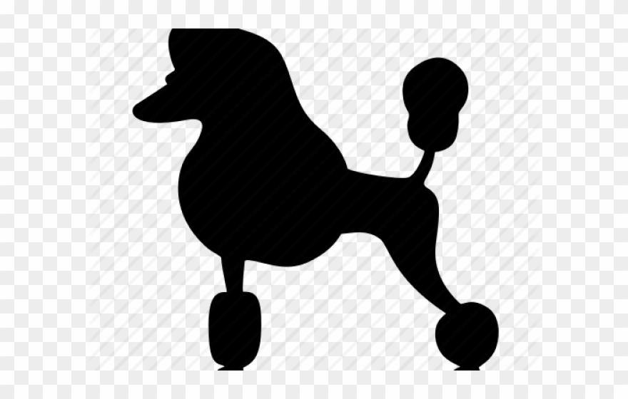 50spoodle clipart svg library library Poodle Clipart Transparent - Miniature Poodle - Png Download ... svg library library