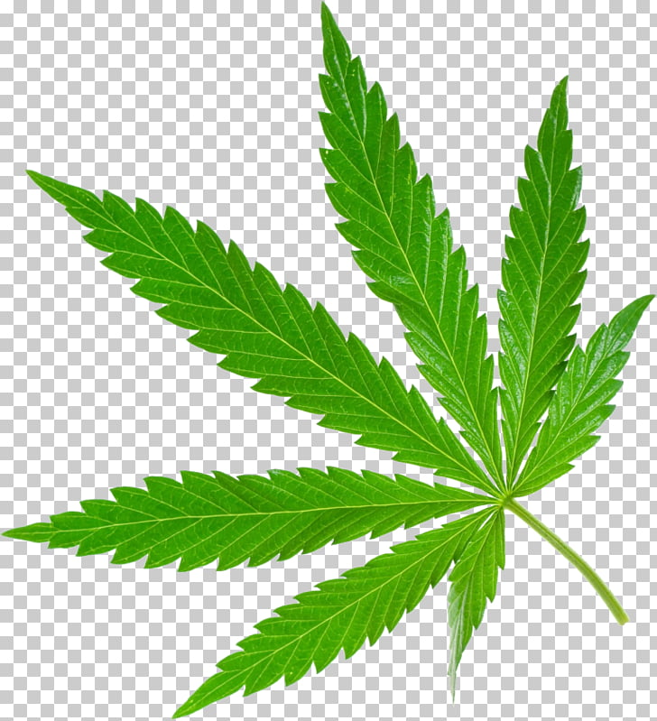 9 inch cannabis clipart royalty free Cannabis sativa Stock photography Medical cannabis 420 Day, cannabis ... royalty free