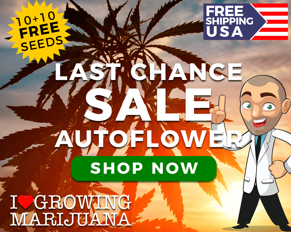 9 inch cannabis clipart banner transparent library How To Grow Weed Hydroponically For Beginners: A Step-By-Step Guide banner transparent library