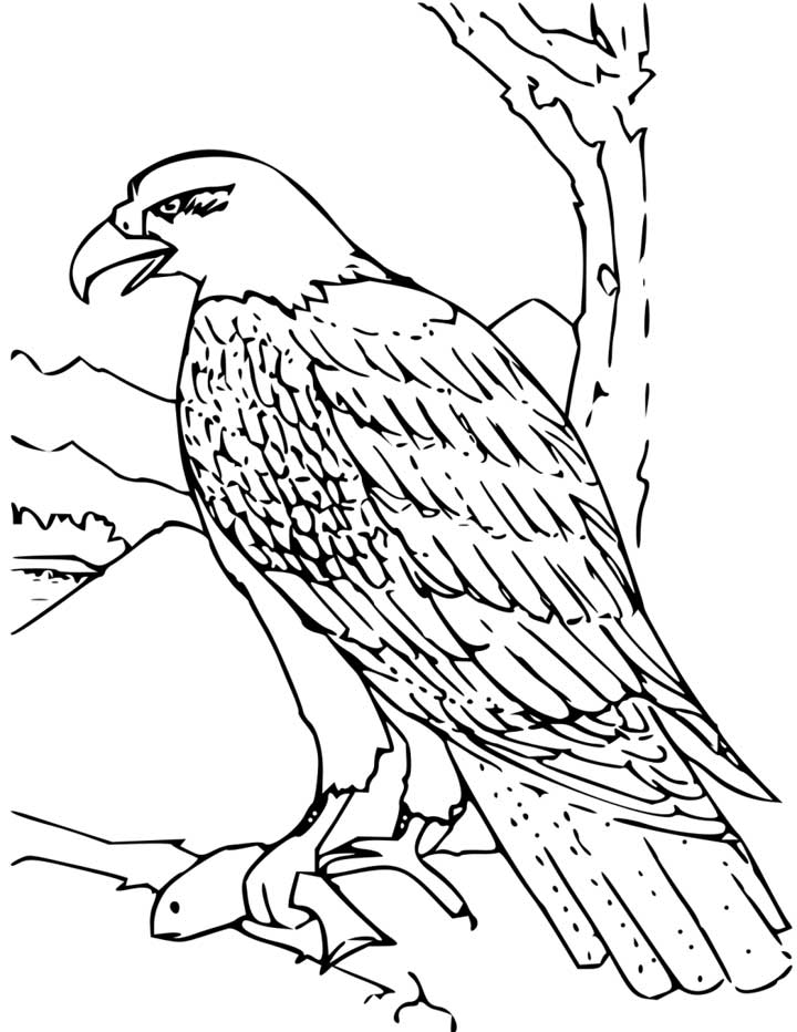 A clipart to color eaglels clip royalty free stock Free Free Eagle Images, Download Free Clip Art, Free Clip Art on ... clip royalty free stock