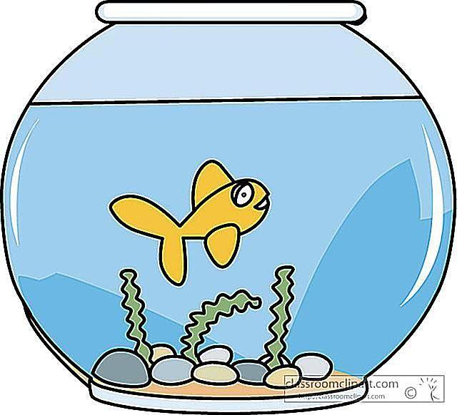 Hundreds of clip art. Fish bowl clipart free