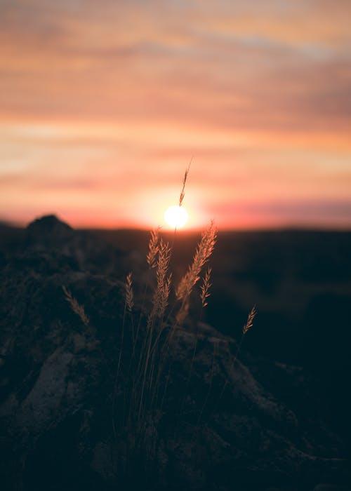 A fresh start sun rise clipart svg freeuse 1000+ Interesting Sunrise Photos · Pexels · Free Stock Photos svg freeuse