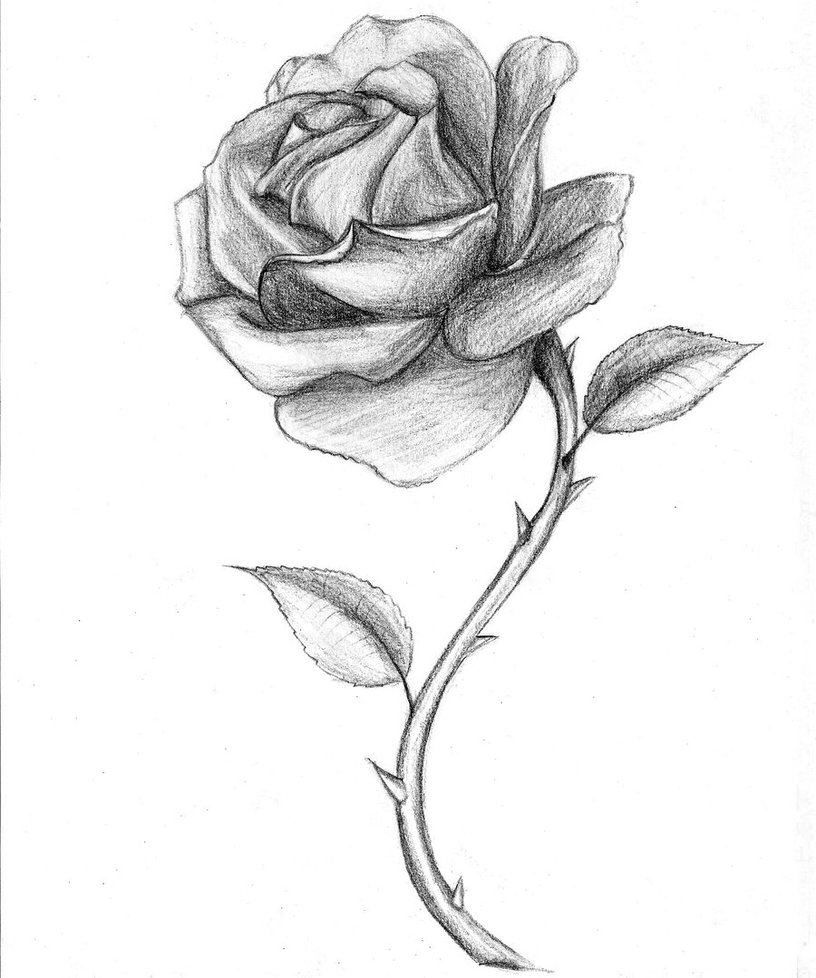A open rose clipart graphic royalty free download Abstract Open Rose Drawing and Free Rose Drawings, Download Free ... graphic royalty free download