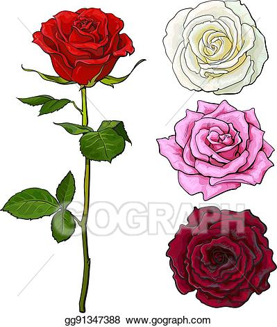 A open rose clipart vector free stock Vector Clipart - Set of pink, white, red rose, top and side view ... vector free stock