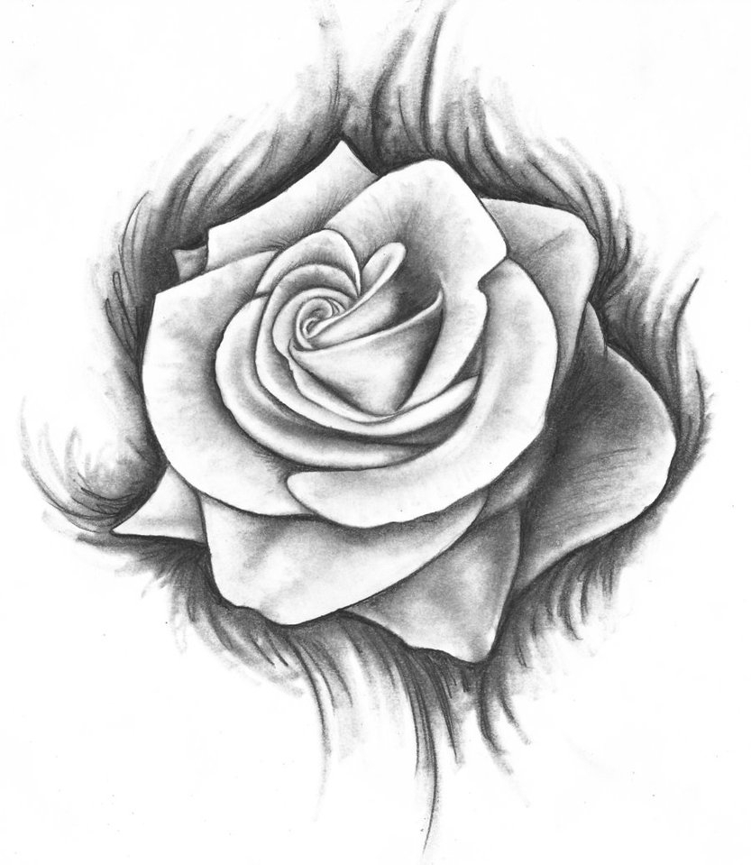 A open rose clipart transparent stock Abstract Open Rose Drawing and Free Rose Drawings, Download Free ... transparent stock