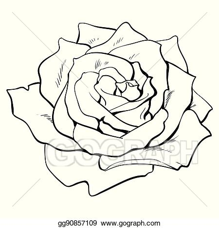 A open rose clipart graphic Vector Clipart - Deep contour rose, top view isolated sketch vector ... graphic