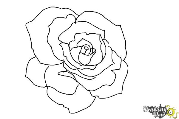 A open rose clipart jpg black and white download How to Draw an Open Rose - DrawingNow jpg black and white download