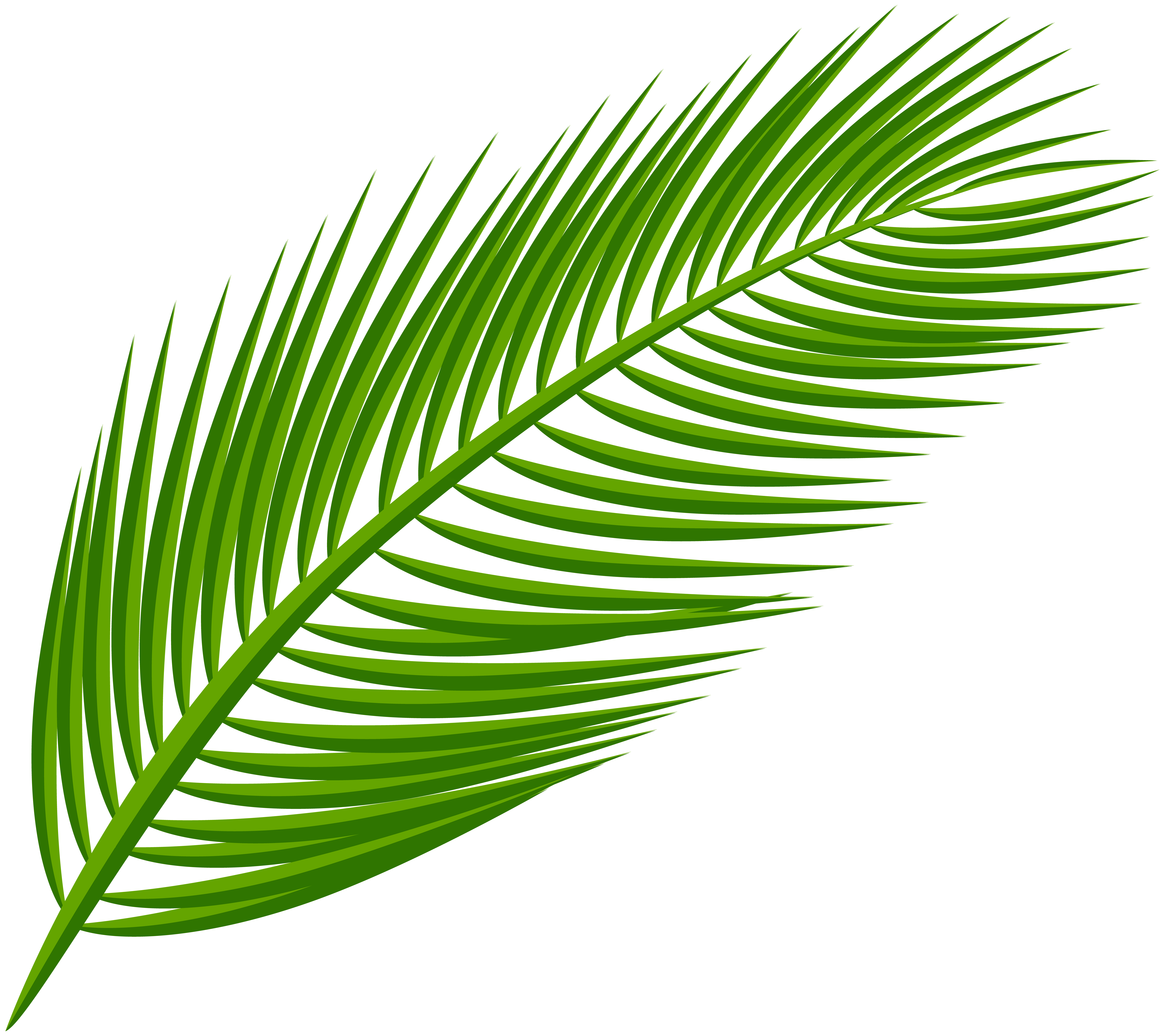 Free clipart of palm leaves