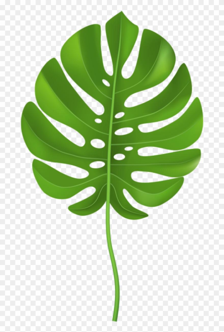 A palm leaf clipart clip download Jungle Leaves Clipart - Palm Leaf Clipart Transparent - Png Download ... clip download