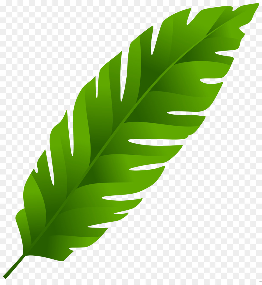 A palm leaf clipart image library Banana Leaf Clipart png download - 7423*8000 - Free Transparent Leaf ... image library
